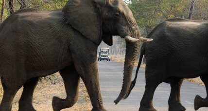Another 'foreign client' in Zimbabwe kills one of Africa's largest elephants