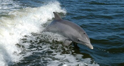 Is the dolphin die-off in the Gulf finally ending?