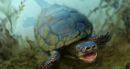 Bizarre pig-nose turtle once swam the prehistoric seas of Utah