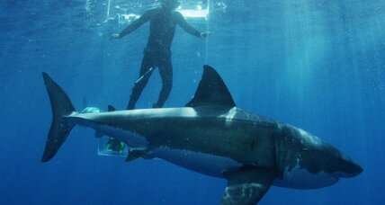 US, Cuba find something to agree on: protecting sharks