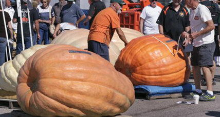 Growing a 2,000-pound pumpkin is as hard as it sounds