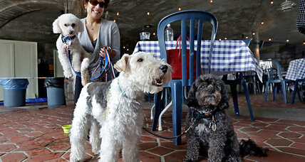 Dogs now allowed in NY restaurants. What are the rules?