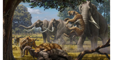 Ancient 'hypercarnivores' preyed on mammoths, say scientists