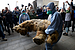 10,000-year-old lion cubs found frozen in Siberia offer link to distant past