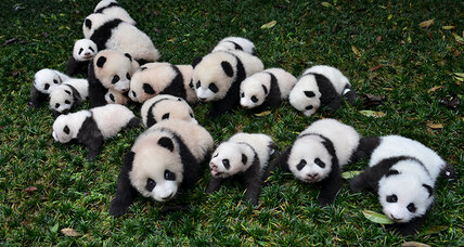 Are pandas worth it?
