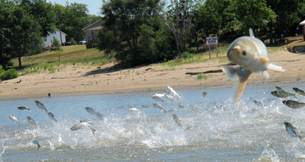 Asian carp move closer to Lake Michigan: Solutions?