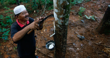What's the next battle to stop illegal logging in Brazil's Amazon?