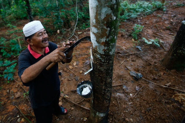 Whats The Next Battle To Stop Illegal Logging In Brazils -1689