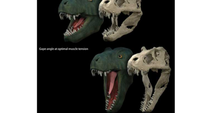 Tyrannosaurus rex had competition for biggest bite