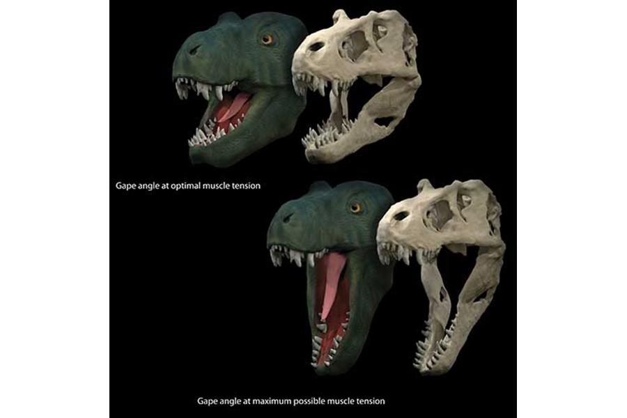 Tyrannosaurus rex had competition for biggest bite