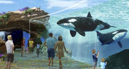 Orca bill would end SeaWorld's 'Shamu shows'