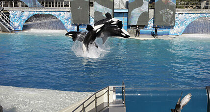 SeaWorld ends controversial orca shows: Why activists want more
