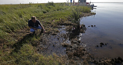 BP oil spill dispersants hindered oil-eating microbes, study says