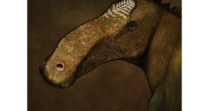 The 'Superduck' dinosaur: How did it get its bill and crest?