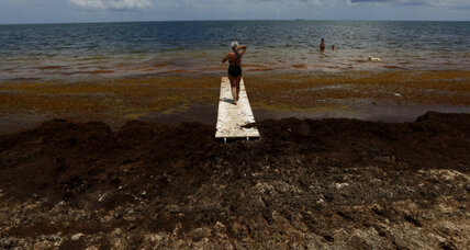 Caribbean nations struggling with foul-smelling seaweed