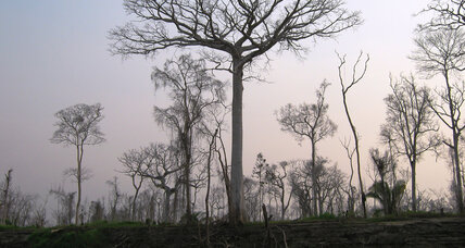 Amazon tree diversity faces staggering threats, but there may still be hope
