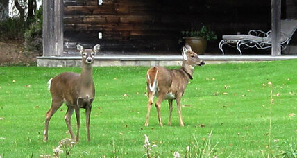 Why two groups are fighting over deer sterilization in the Hamptons