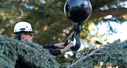 California drought: What it means for Christmas trees