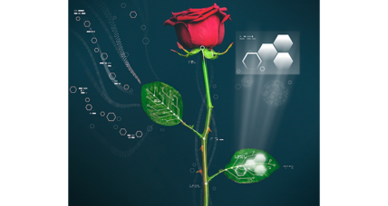 Cyborg rose: The beginning of a cyborg plant era?