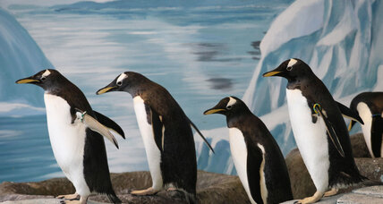 How penguins could inspire safer planes