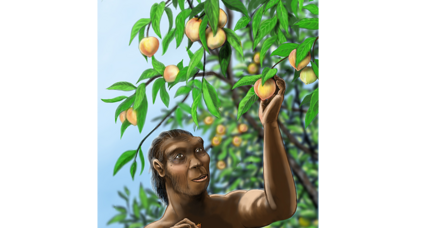 Paleo peach pits: Was the sweet, juicy fruit in China way before humans?