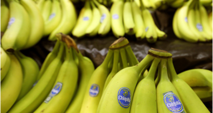 Is the top-selling banana really going extinct?