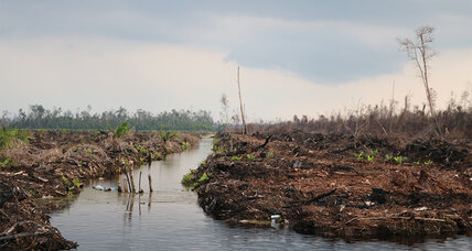 Climate change: Why Indonesia's forests are crucial to emission curbs