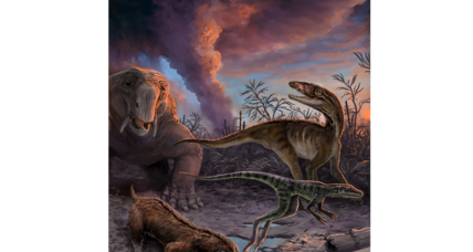 Dinosaurs' early cousins may have lived more recently than we thought