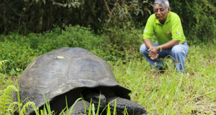 Lonesome George returns? How to bring back extinct Galápagos tortoise species