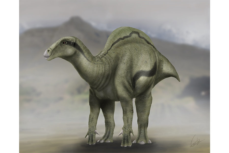 Bizarre new dinosaur species sported a mysterious 'sail' on its back