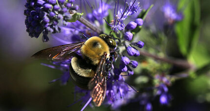 Wild bees are in decline. How can we take the sting out of it?