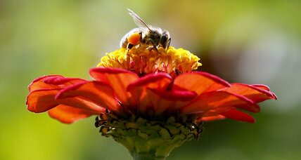 Wild bee decline study: How farmer's friends are receiving support