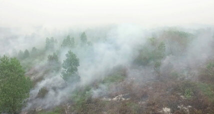 Indonesia punishes 23 companies for causing forest fires