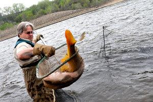 Asian carp in great lakes