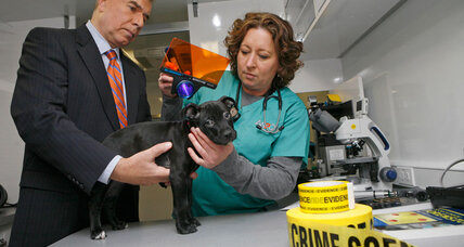 Why the FBI is now tracking animal cruelty (+video)