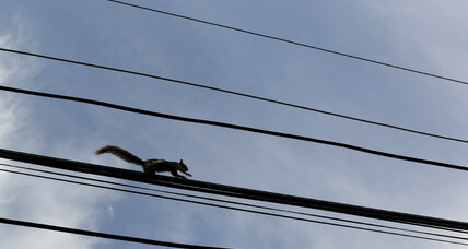 Opinion: Squirrels are bigger threat than hackers to US power grid
