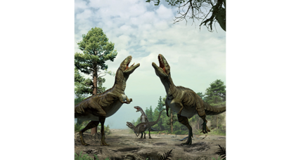 Did dinosaurs woo mates with fancy footwork?