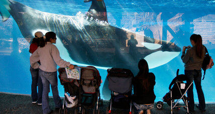 Is settlement with Calif. OSHA a small victory for SeaWorld?