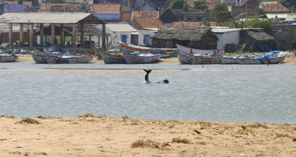 Why are whales beaching themselves by the dozen in India?