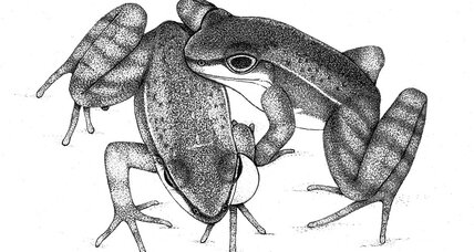 These Brazilian frogs sing and dance to communicate