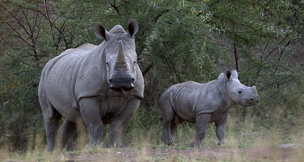 Rhino poaching in South Africa lower in 2015. A turning point?