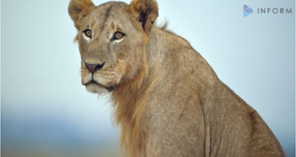 Researchers find hidden lion population in East Africa