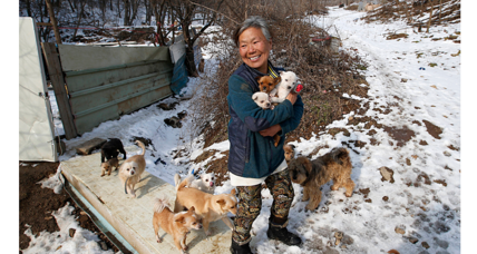 Meet the woman who saved hundreds of dogs from being food