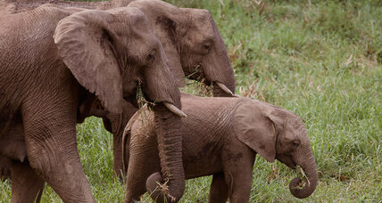 Why Swaziland is putting 18 elephants on a Boeing 747