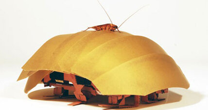 Robo-roach to the rescue? Creepy bugs inspire lifesaving technology. (+video)