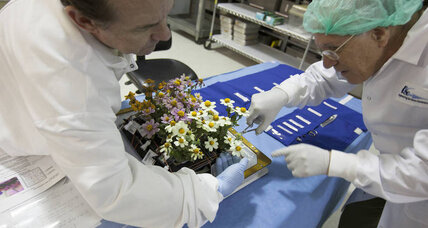 NASA's green thumb: Why astronauts harvested zinnia plants in space