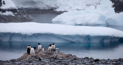 Why have 150,000 penguins mysteriously disappeared?
