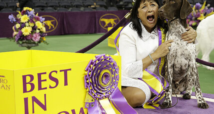 'Born winner' C.J.'s stoicism nabs Westminster's Best in Show