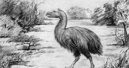 Giant, flightless birds stalked the Arctic swamps 53 million years ago