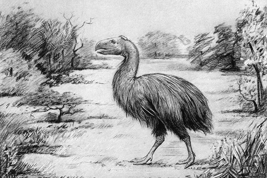 Giant Flightless Birds Stalked The Arctic Swamps 53